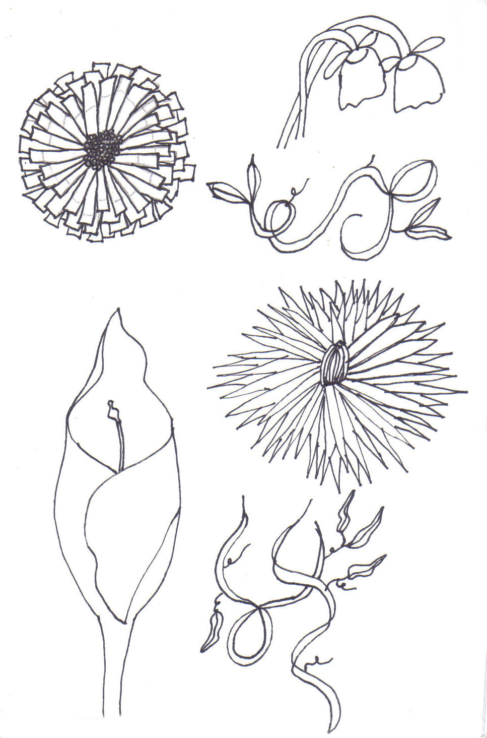Simple sketched flowers the image kid for How to draw a basic flower
