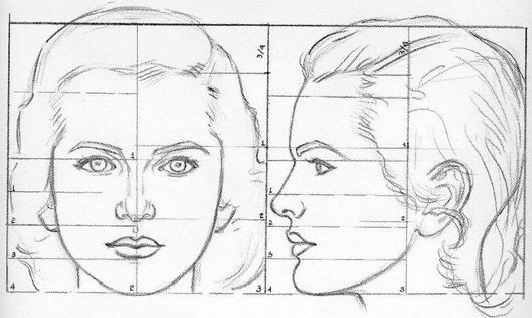 Proportions of a girl's head by Andrew Loomis.