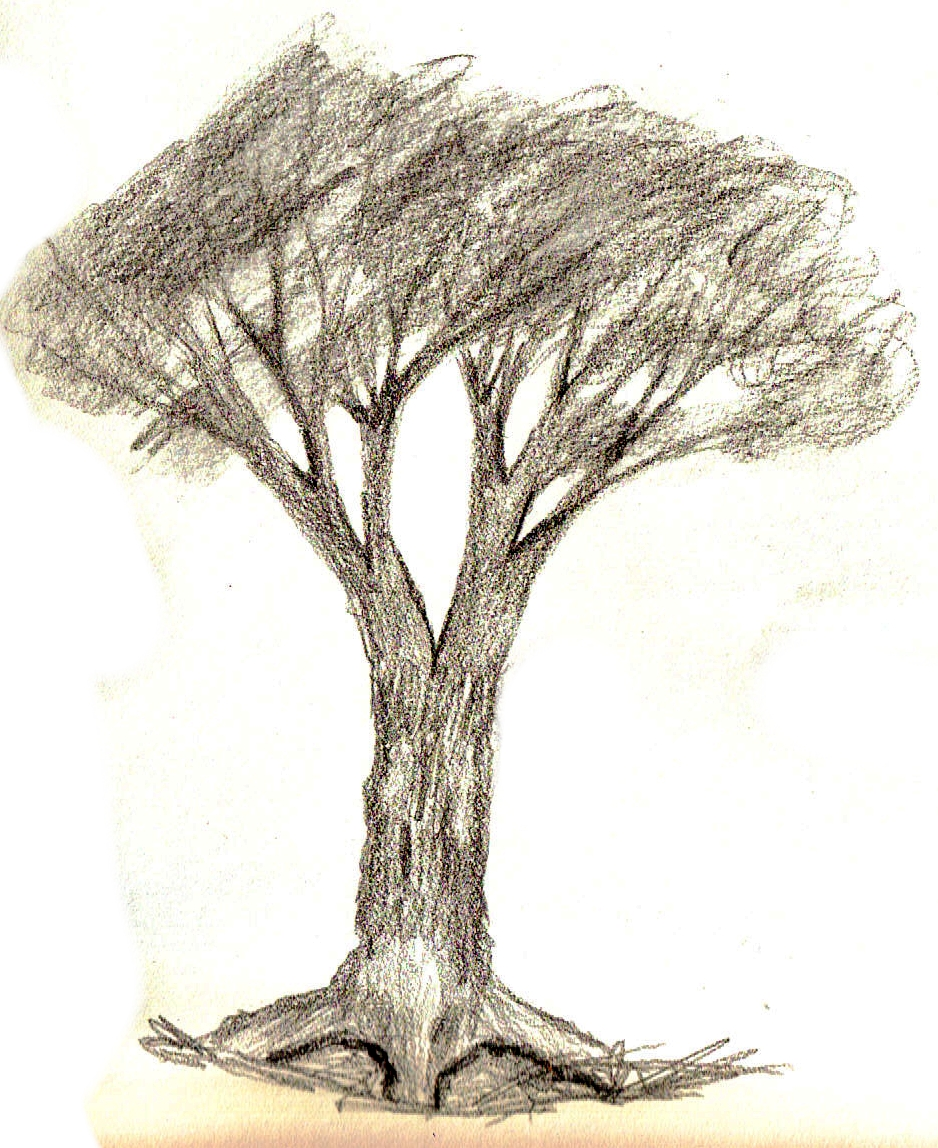 How To Draw A Tree 4