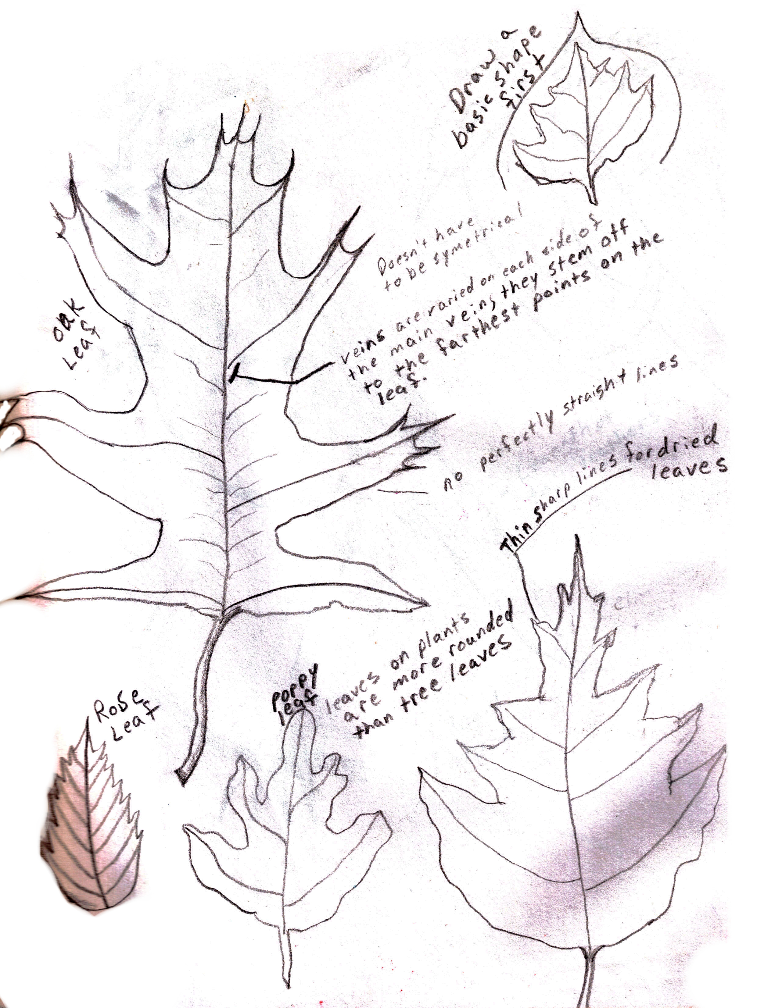 how to draw trees guide art questions answered