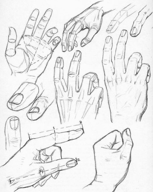 Construction of the hand by Andrew Loomis.
