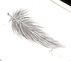 how to draw a down feather