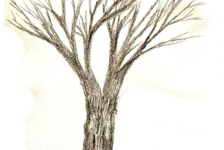 how to draw a tree 3
